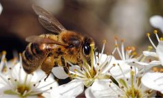 Scientists say their latest research could keep our bees safe from insecticides