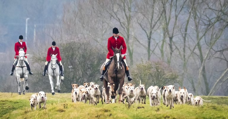 Fox hunters on horseback